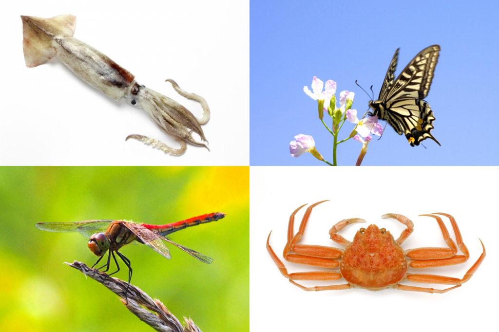 図4:「無脊椎動物」の仲間
