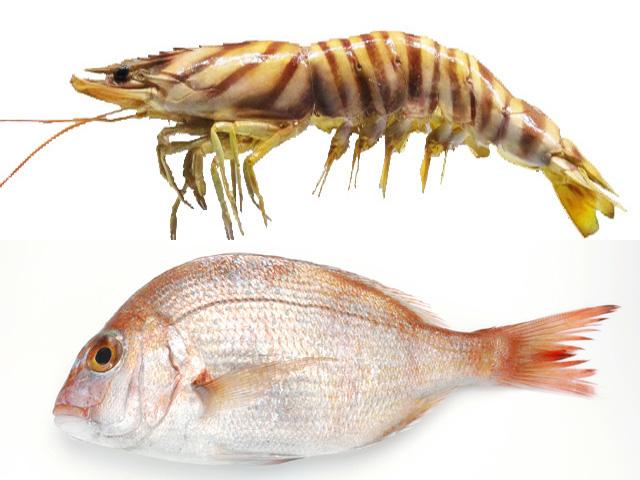 海老と鯛に学ぶ 生物進化論【前編】